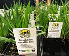In the Zone's new native plant tag will help gardeners in southern Ontario choose plants that are good for wildlife and the environment.