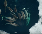 Narwhal scene in Frozen Worlds episode, Our Planet/Netflix tv series