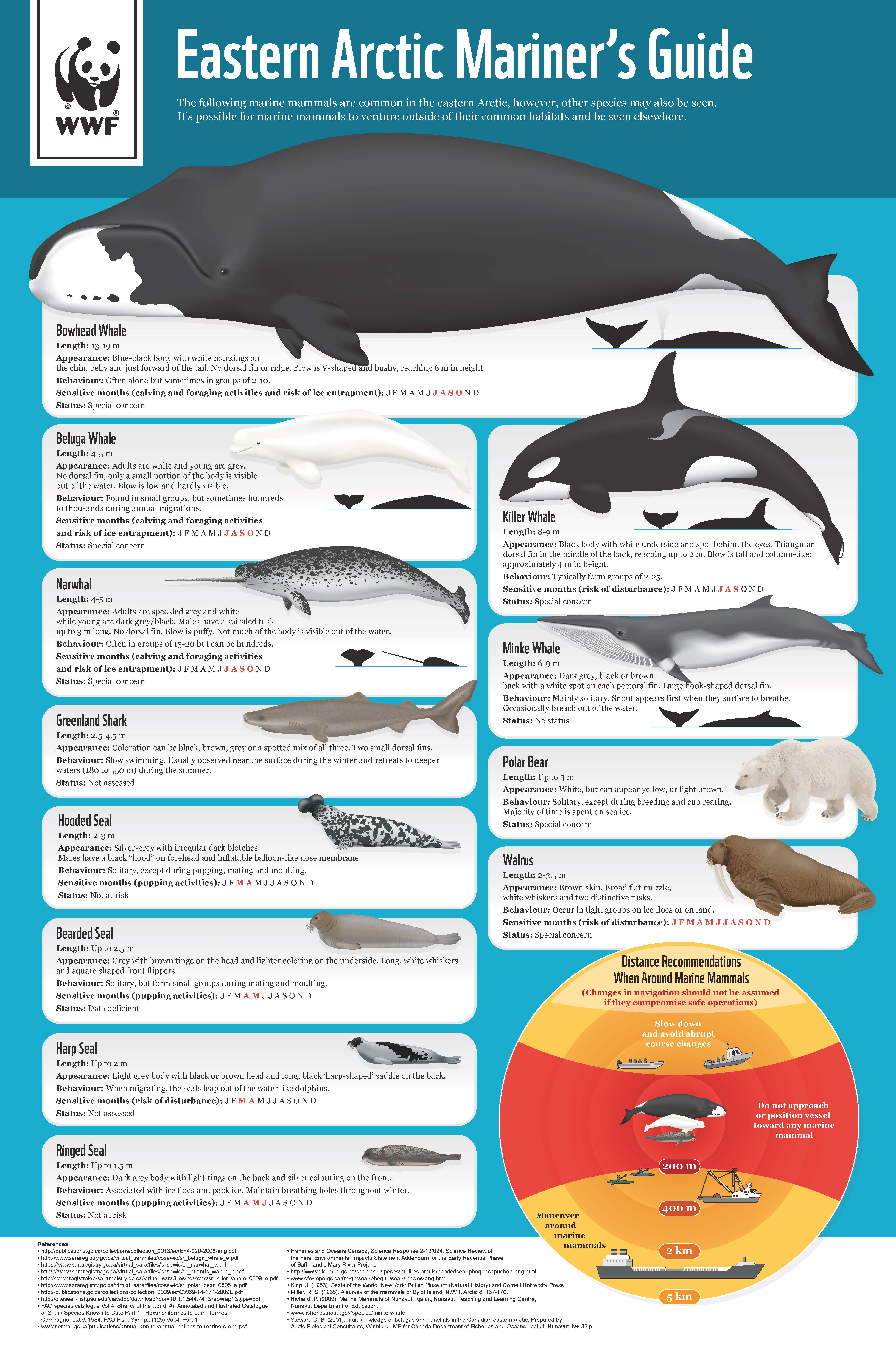 new wwf guide helps mariners steer clear of arctic wildlife wwf canada rh wwf ca Marine Electrician Marine Security Guard
