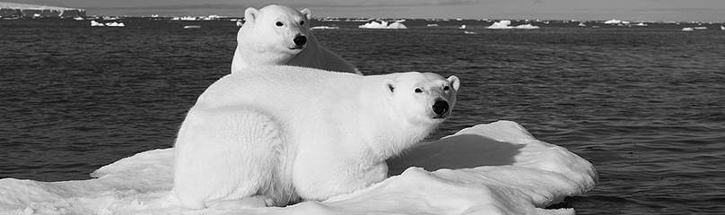 Two polar bears on a piece of ice in the Arctic Ocean, Svalbard  	© Florian Schulz/visionsofthewild.com