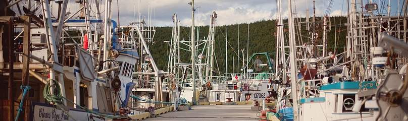 Various sizes of commercial fishing boats tied up at the wharf in the Small Boat Basin in St. ...  	© Alyssa Bistonath / WWF-Canada